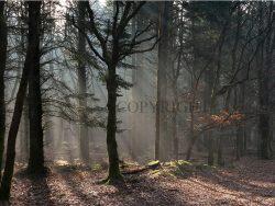 Skovens dybe ro